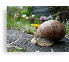 Snail and yellow flower Canvas Print