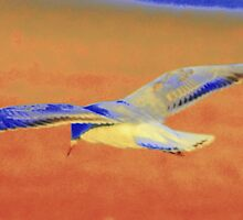 Gull on the wing by bekyimage