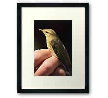 Bird ringing at Portland bill Framed Print