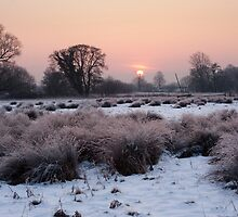 Frozen Watermeadows by Christopher Cullen