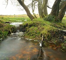 New forest wetlands  by miradorpictures