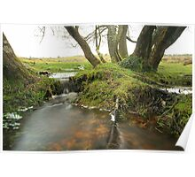 New forest wetlands  Poster