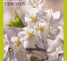 To A Special Teacher with Cherry Blossoms Greeting Card by daphsam