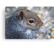 Mid-Morning Snack Canvas Print