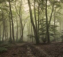 Morning Forest by Photokes