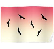 cranes flying across the sky at sunset Poster