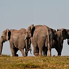 Kwantu Elephants 1 by Warren. A. Williams
