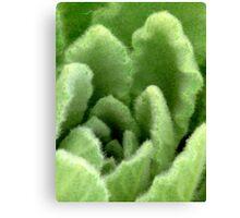 Skunk Cabbage Canvas Print