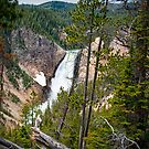 Falls in the Grand Canyon of Yellowstone by Randall Nyhof