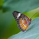 The Leopard Lacewing by fernblacker