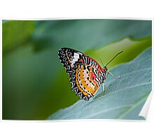 The Leopard Lacewing Poster