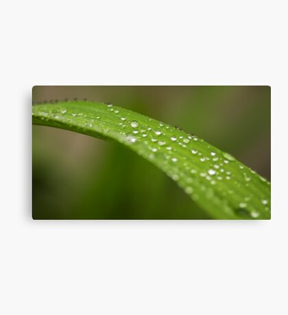 Macro work Canvas Print