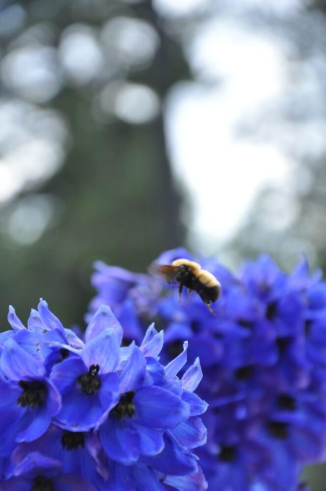 Bumble Bee by worretphoto