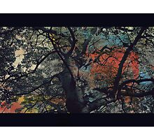 The painted sky  Photographic Print