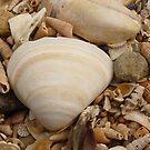 I See Sea Shells  by Fara