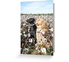 Cotton Field Puppies  Greeting Card