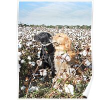 Cotton Field Puppies  Poster