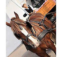 Wagon Horse Photographic Print