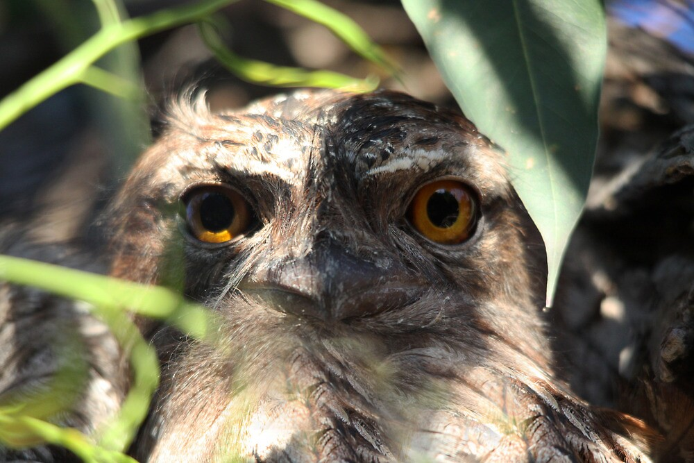 The Eyes Have It (Female) by byronbackyard