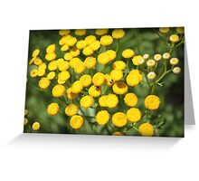 Yellow Flowers and Critters!! Greeting Card