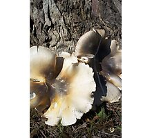 Fungus in an artistic way #2 Photographic Print