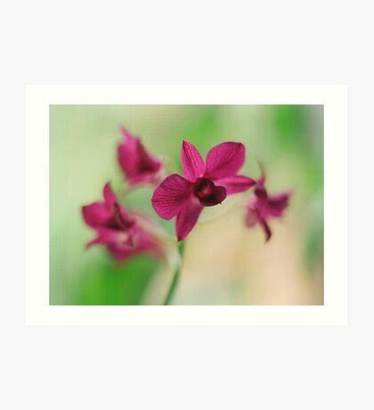 Orchid Purple Art Print