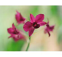 Orchid Purple Photographic Print