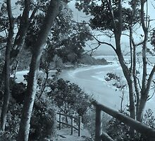 Path to Wategoes - Byron Bay  by Louise Linossi Telfer