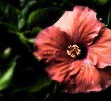 Huge Hibiscus Flower III by Scott Mitchell
