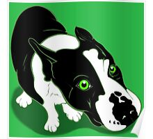 Mr Bull Terrier Green Poster