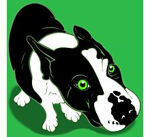 Mr Bull Terrier Green Photographic Print
