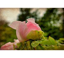 Tenderness Photographic Print