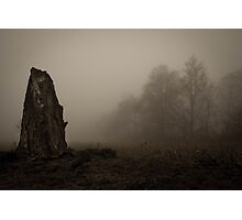 old dead tree  Photographic Print