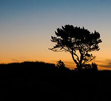 silhouette of the tree by Anne Scantlebury