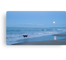 black dog in the moonlight Canvas Print