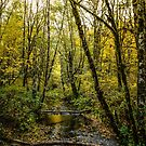 Creeks #88769 by Charles & Patricia   Harkins ~ Picture Oregon