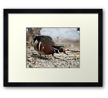 Did you hear the news? Framed Print
