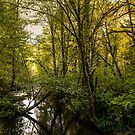 Creeks #5453232 by Charles & Patricia   Harkins ~ Picture Oregon