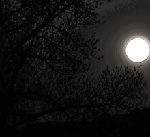 Full Moon Risin by Chris W.  Smith