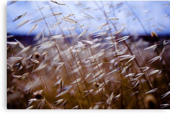 grass on blue by Victor Bezrukov