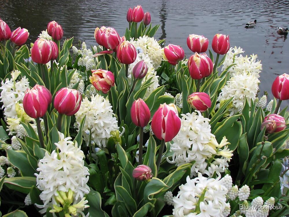 Flowers and Feathers - Keukenhof Gardens by BlueMoonRose