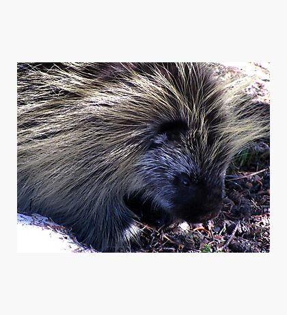 Prickly Companion Photographic Print