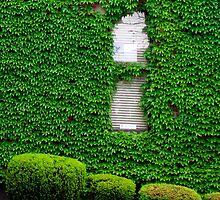 Ivy by Sandra Lee Woods