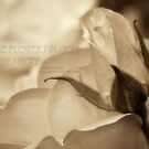 Romance in  sepia - Hope by Celeste Mookherjee