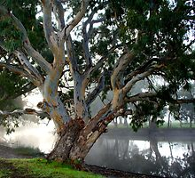 River Gums by Kerry  Hill