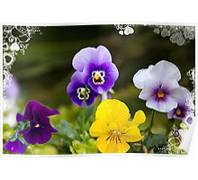 I love my pansies! Poster