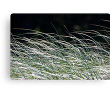 Grass Blowing in The Wind - Elliott Heads - Australia Canvas Print