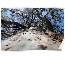 Trunk Canopy Poster