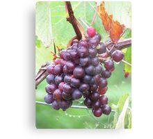 Grape Vine Metal Print