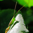 Grasshopper on a pumpkin leaf by ThisMoment